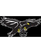 LIU Brooklyn Blackbirds (Long Island University)