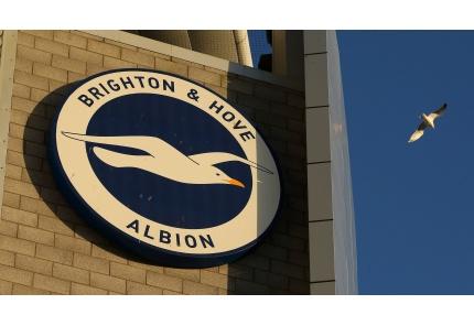 Brighton Möwe